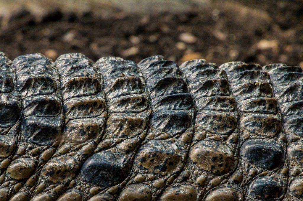 Comment se débarrasser de la peau de crocodile