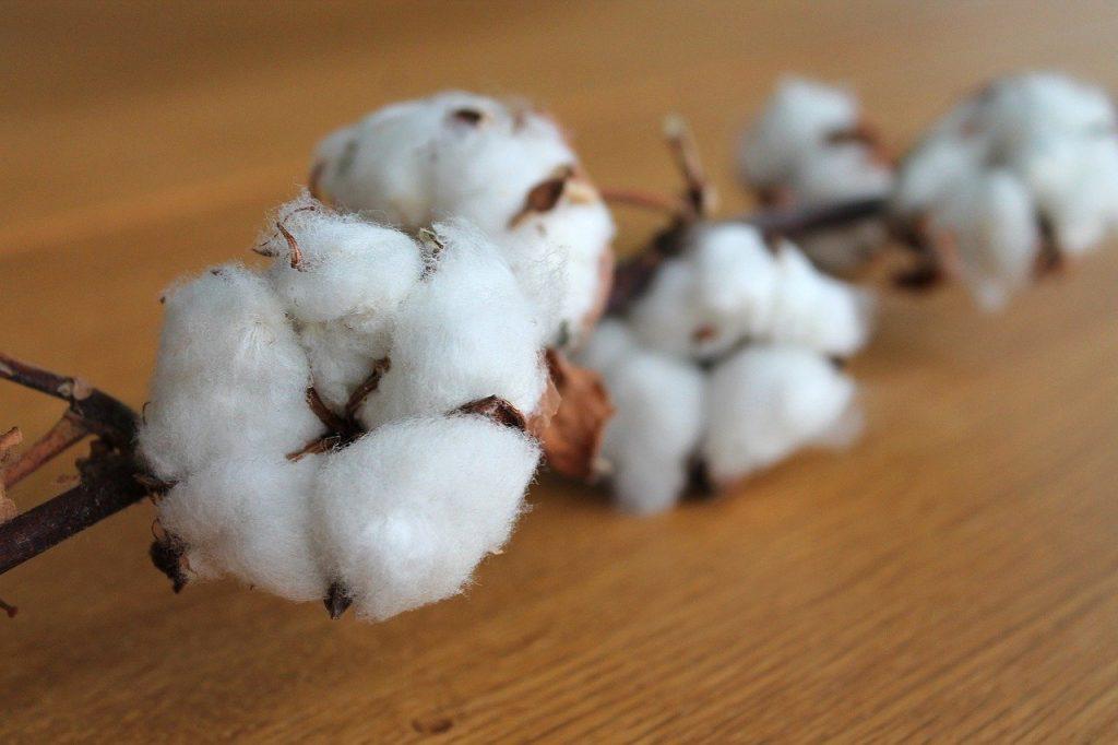 production coton bio textile